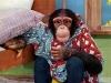 chimpkind-(1)