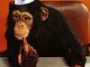 chimpkind-(19)