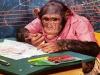 chimpkind-(20)