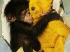 chimpkind-(7)