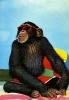 chimpman-(3)