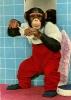 chimpman003