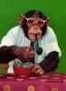 chimpman004
