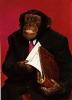 chimpman010