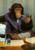 chimpman011