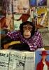 chimpman022