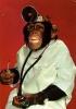 chimpman029