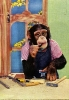 chimpman034