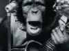 chimpman075