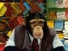 chimpman088