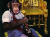 chimpman090