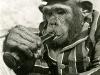 chimpman091