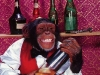 chimpman099