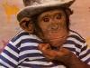chimpman102