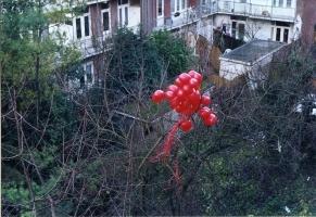 rode-ballons002